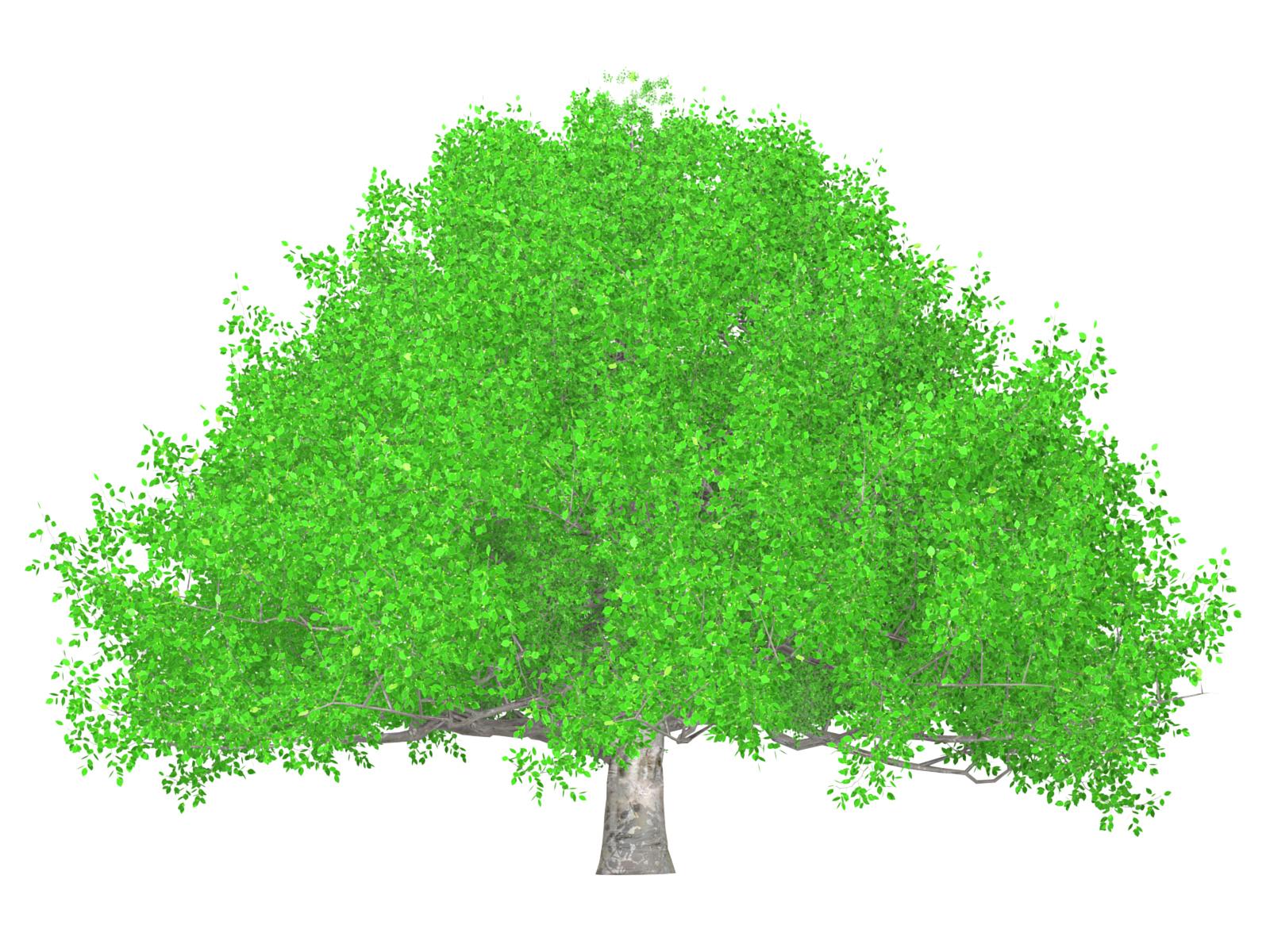 ば 大樹 の 寄ら